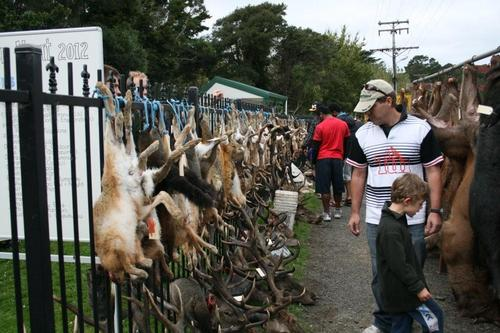 Junior entries line the fence